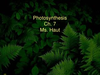 Photosynthesis Ch. 7 Ms. Haut