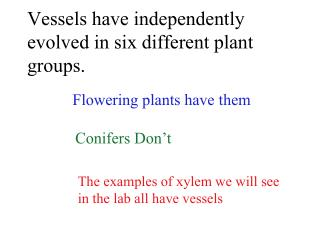 Vessels have independently evolved in six different plant groups.