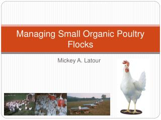 Managing Small Organic Poultry Flocks