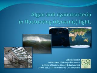 Algae and  cyanobacteria in fluctuating (dynamic) light.