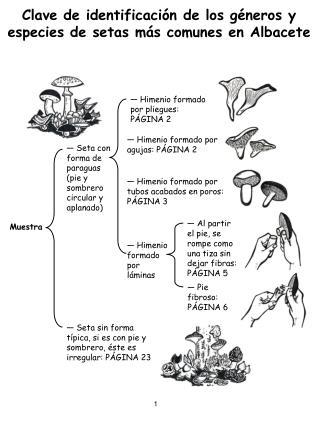 Clave de identificaci n de los g neros y especies de setas m s comunes en Albacete