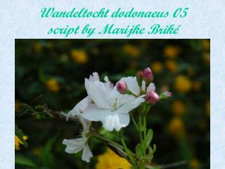 Wandeltocht dodonaeus 05 script by Marijke Briké