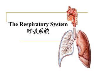 The Respiratory System 呼吸系统