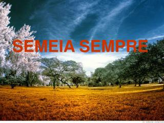 SEMEIA SEMPRE