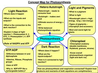 Concept Map for Photosynthesis
