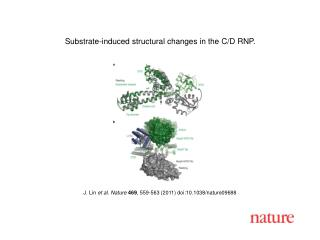 J. Lin  et al. Nature 469 , 559-563 (2011) doi:10.1038/nature09688