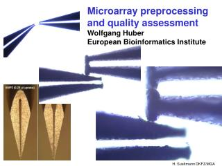 Microarray preprocessing and quality assessment Wolfgang Huber European Bioinformatics Institute