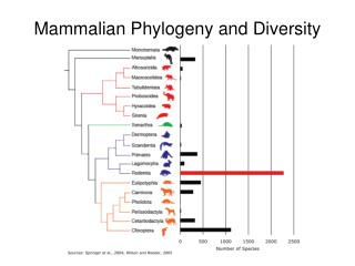 Mammalian Phylogeny and Diversity