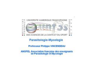 Le Paludisme Pr P. Vincendeau