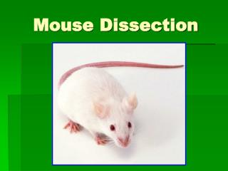 Mouse Dissection