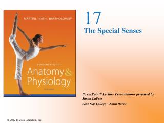 17 The Special Senses
