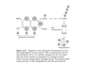 Phytochrome moves to the nucleus