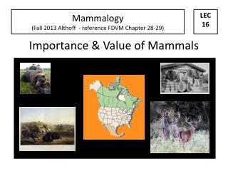 Importance & Value of Mammals