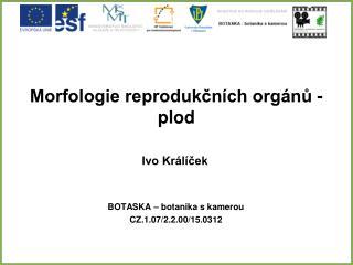 Morfologie reprodukčních orgánů - plod