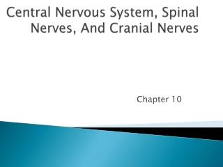 Central Nervous System, Spinal Nerves, And Cranial Nerves