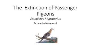 The  Extinction of  P assenger  Pigeons  E ctopistes M igratorius