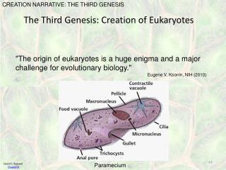 The Third Genesis: Creation of Eukaryotes