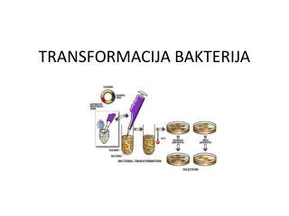 TRANSFORMACIJA BAKTERIJA