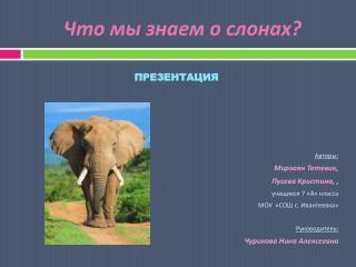 Что мы знаем о слонах?