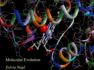 Molecular Evolution Sylvia Nagl