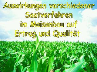 Auswirkungen verschiedener Saatverfahren im Maisanbau auf Ertrag und Qualität