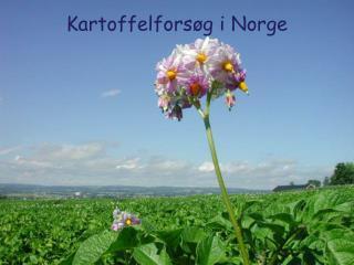 Kartoffelforsøg i Norge