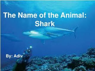 The Name of the Animal: Shark