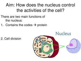 Aim: How does the nucleus control the activities of the cell?