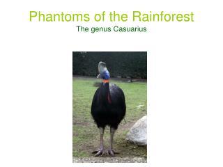 Phantoms of the Rainforest The genus Casuarius