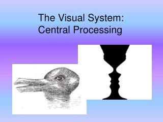 The Visual System: Central Processing