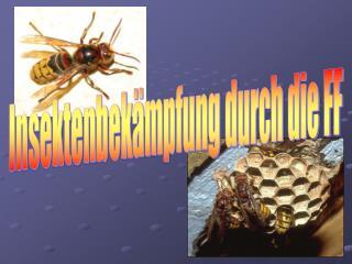 Insektenbekämpfung durch die FF