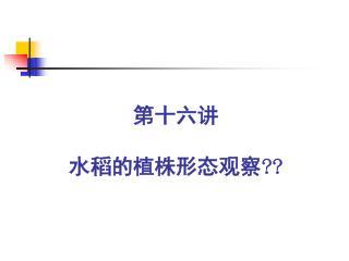 第十六讲 水稻的植株形态观察??