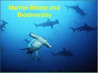 Marine Biome and Biodiversity