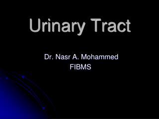 Urinary Tract