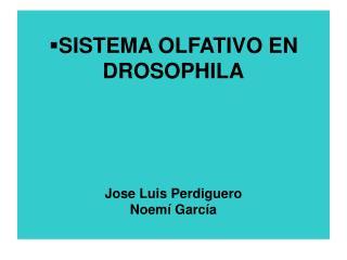 SISTEMA OLFATIVO EN DROSOPHILA Jose Luis Perdiguero Noemí García