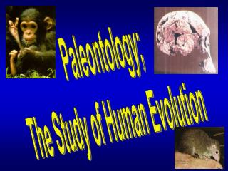 Paleontology; The Study of Human Evolution
