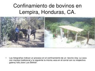 Confinamiento de bovinos en Lempira, Honduras, CA.