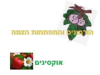הורמונים והתפתחות הצמח