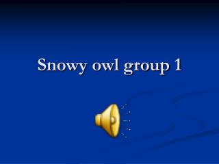 Snowy owl group 1