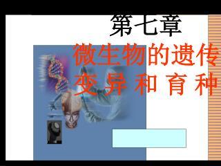 第七章 微生物的遗传 变 异 和 育 种