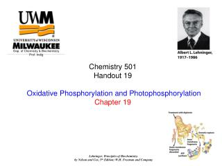 Chemistry 501   Handout 19   Oxidative Phosphorylation and Photophosphorylation Chapter 19
