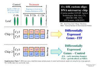 Supplementary Figure  7 Hayashi et al