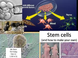 Stem cells  (and how to make your own)