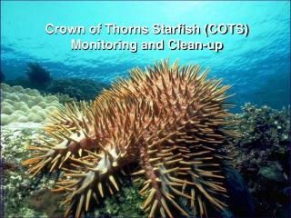 Crown of Thorns Starfish (COTS) Monitoring and Clean-up
