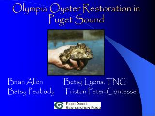 Olympia Oyster Restoration in Puget Sound