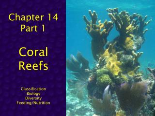 Chapter 14 Part 1 Coral  Reefs Classification Biology Diversity Feeding/Nutrition