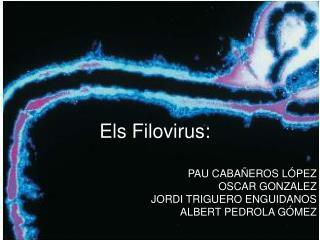 Els Filovirus: