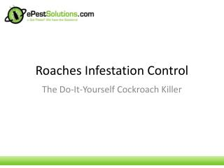 Roaches Infestation Control: The DIY Cockroach Killer