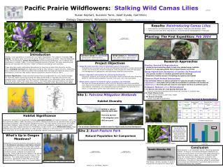 Pacific Prairie Wildflowers:   Stalking Wild Camas Lilies