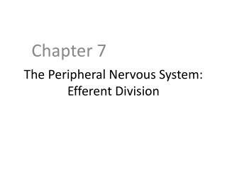 The Peripheral Nervous System: Efferent Division